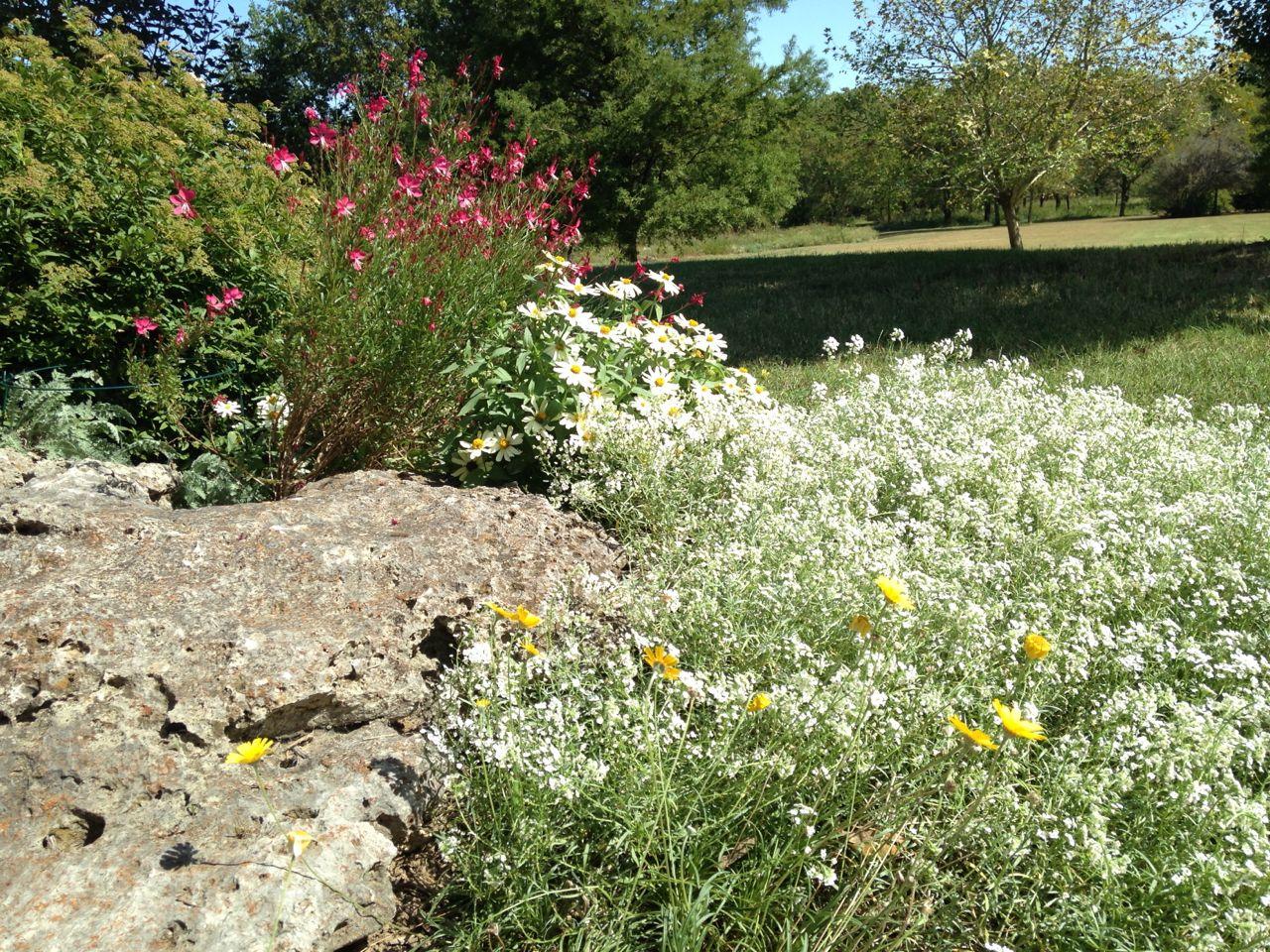 Still Blooming in October